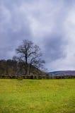 Os campos aproximam a abadia de Rievauxl Imagem de Stock