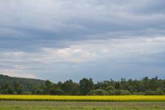 Um campo pitoresco com as flores selvagens amarelas em um fundo conífero da floresta da montanha e em um céu brilhante bonito azu Imagem de Stock Royalty Free