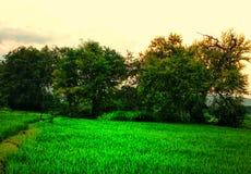 Um campo verde fotos de stock