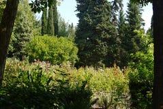 Um canteiro de flores bonito com crescimento de flores alto em um parque entre arbustos verdes e árvores luxúrias sob os raios de Fotografia de Stock