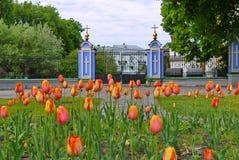 Um canteiro de flores com as tulipas nos pés altos contra o contexto da porta na entrada à igreja Imagem de Stock