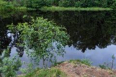 Um canto pitoresco da natureza nas baías da ilha foto de stock royalty free
