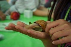 Um caracol na mão Fotos de Stock