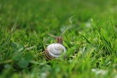 Um caracol no jardim Foto de Stock Royalty Free