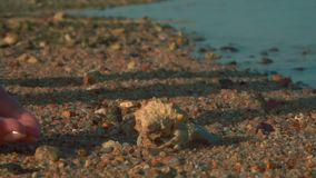 Um caranguejo de eremita corre da palma à areia vídeos de arquivo