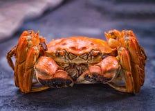 Um caranguejo peludo cozinhado imagens de stock royalty free