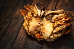 Um caranguejo peludo cozinhado foto de stock