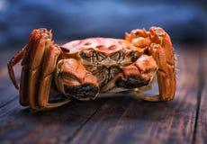 Um caranguejo peludo cozinhado fotos de stock