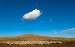 Um carneiro ouvido no Patagonia foto de stock