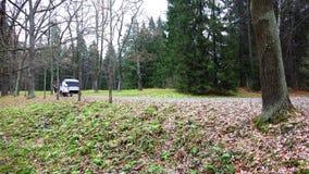 Um carro carregado move-se lentamente através da floresta vídeos de arquivo