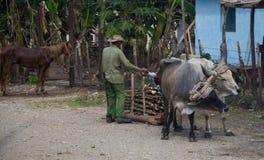 Um carro do boi em Cuba rural foto de stock