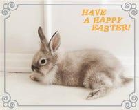 Um cartão que descreve um coelho e os desejos de um feriado feliz da Páscoa imagem de stock royalty free