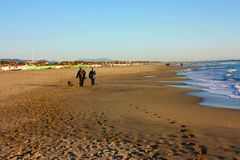 Um casal idoso dá uma volta sereno na praia no por do sol com seu cão fiel do animal de estimação fotografia de stock