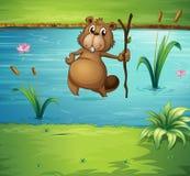 Um castor com uma madeira no rio Fotografia de Stock