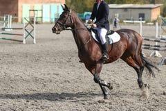 Um cavaleiro do cavalo na competição de salto do cavaleiro Imagens de Stock Royalty Free