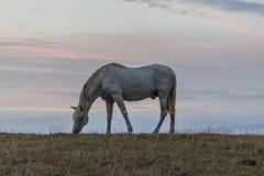 Um cavalo branco bonito que alimenta em um pasto verde na Espanha na frente do oceano foto de stock royalty free