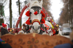 Um cavalo branco com chicote de fios vermelho, Suzdal, Rússia Fotografia de Stock Royalty Free