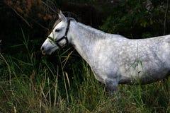 Um cavalo branco junto com o mais forrest foto de stock