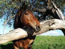 Um cavalo com uma árvore Fotografia de Stock Royalty Free
