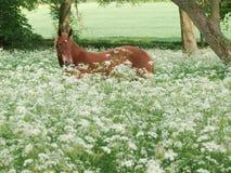 Cavalo que está em flores selvagens foto de stock