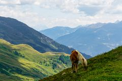 Um cavalo do palomino que alimenta no lado de uma montanha durante o summ fotos de stock