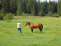 Um cavalo em um rancho em idaho Foto de Stock Royalty Free