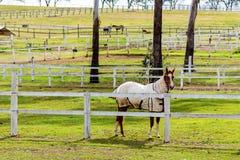 Um cavalo em uma exploração agrícola de parafuso prisioneiro - Austrália imagem de stock royalty free