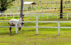 Um cavalo em uma exploração agrícola de parafuso prisioneiro - Austrália imagens de stock royalty free