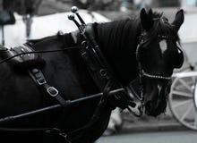 Um cavalo-força Fotos de Stock Royalty Free