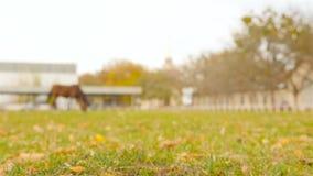 Um cavalo na distância é armazenado na exploração agrícola Come a grama verde Movimento lento vídeos de arquivo