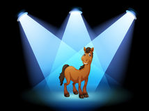 Um cavalo na fase sob os projectores Imagens de Stock Royalty Free
