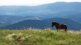 Um cavalo nas montanhas Fotos de Stock Royalty Free