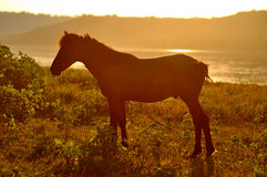 Um cavalo no por do sol Fotografia de Stock Royalty Free