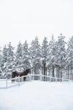 Um cavalo no prado no inverno, inverno nevado dentro fotos de stock