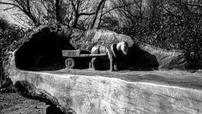 Um cavalo nos reboques velhos Fotos de Stock