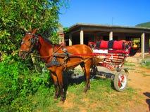 Um cavalo nos reboques velhos Foto de Stock Royalty Free