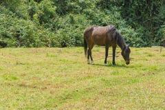 Um cavalo que come a grama fotografia de stock royalty free
