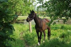 Um cavalo que dá uma volta no jardim fotografia de stock