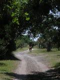 Um cavalo que obstrui a estrada Foto de Stock