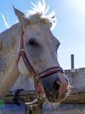 Um cavalo que olha me no fim acima na parte dianteira o sol foto de stock royalty free