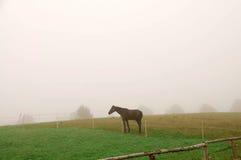 Um cavalo que pasta na névoa. foto de stock