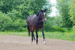 Um cavalo running Fotografia de Stock Royalty Free