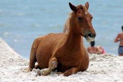 Um cavalo selvagem na praia Fotografia de Stock Royalty Free