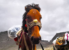 Um cavalo sob o kailash Imagem de Stock Royalty Free