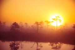 Um cenário bonito, sonhador da manhã do sol que aumenta acima de um pântano enevoado Olhar colorido, artístico imagens de stock