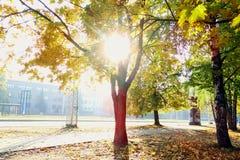 Um cenário do outono em um dia surpreendentemente ensolarado Imagem de Stock Royalty Free