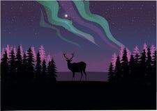 Um cervo solitário que olha fixamente na aurora boreal ilustração stock
