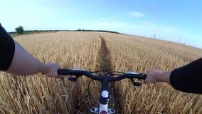 Um ciclista do homem em uma bicicleta monta através de um campo de trigo vídeos de arquivo