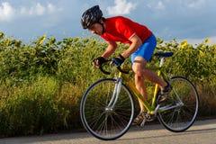 Um ciclista monta em uma bicicleta da estrada ao longo dos campos dos girassóis Imagem de Stock