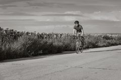 Um ciclista monta em uma bicicleta da estrada ao longo dos campos dos girassóis Imagens de Stock Royalty Free